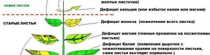 Фитоиндикация или растения вместо тестов