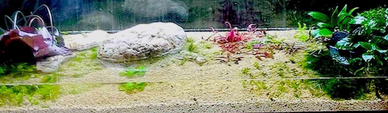 Запуск первого аквариума