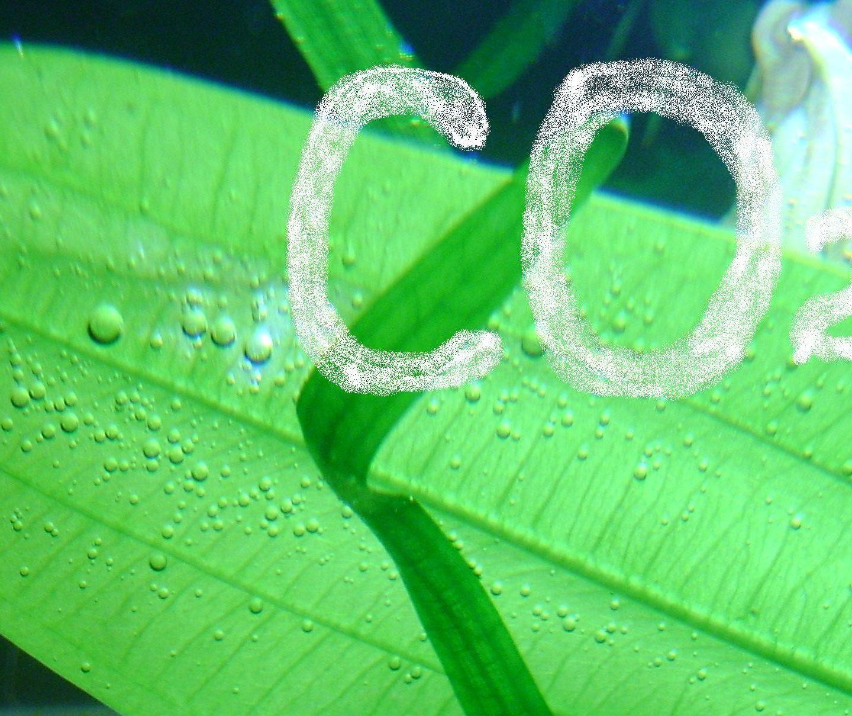 Источники углекислого газа (СО2) в аквариуме