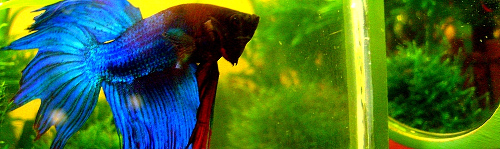 У меня неожиданно появился аквариум