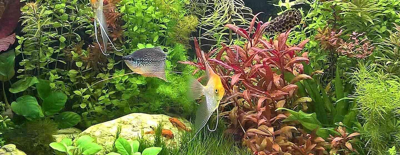 Хочу завести аквариум