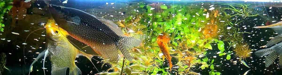Как правильно кормить рыбок?