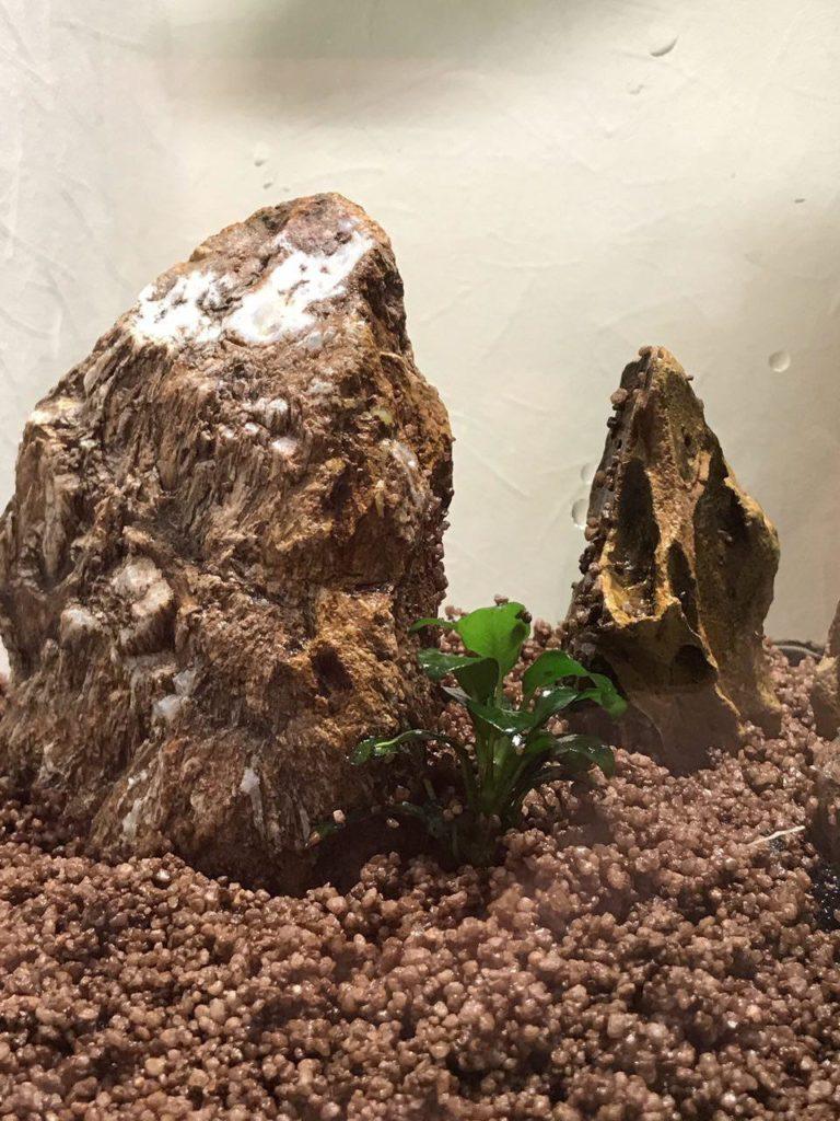 Камень-дракон