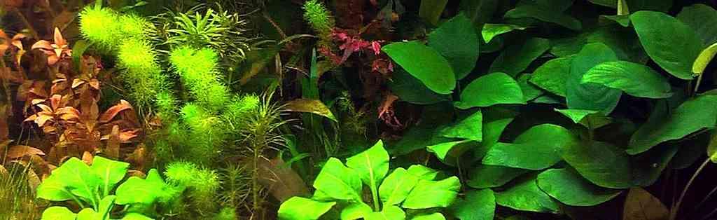 Томас Барр. Метод оптимального дозирования удобрений в аквариуме.