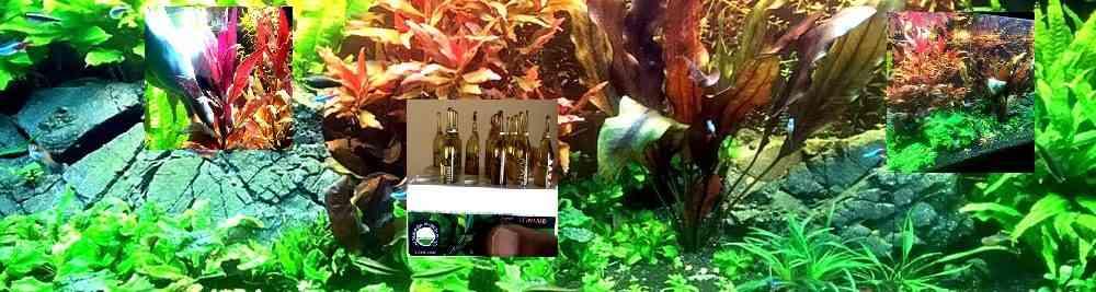 Бактерии как одна из основ биологического равновесия в аквариуме