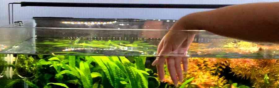 Выбор качественного и надежного аквариума