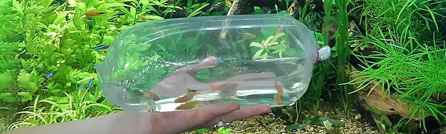 Покупка рыбы. Инструкция для начинающих аквариумистов