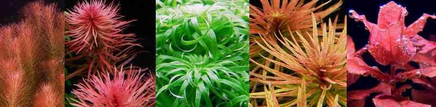 Топ 5 аквариумных растений для форсированного травника